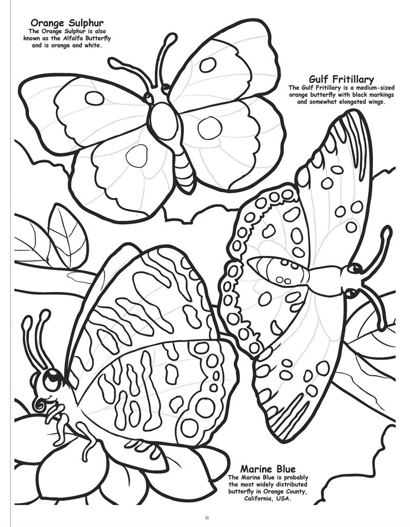 Coloring Book Publishers | Butterflies and Birds Coloring Book