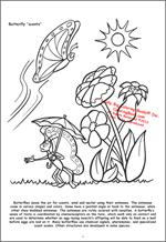 Butterflies and Birds Coloring Page